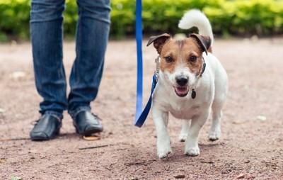 青いリードに繋がれて散歩する犬