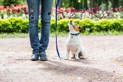 散歩中におすわりをして飼い主を見上げる犬