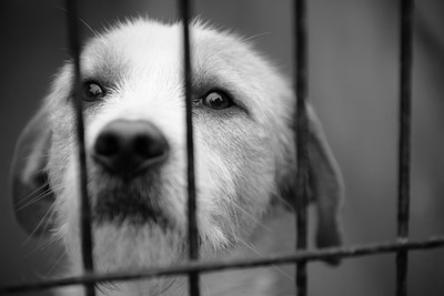 ケージの中からこちらを見つめる犬