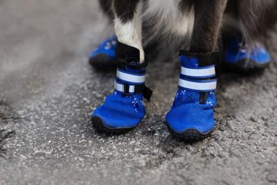 青い靴を履いている犬の足元