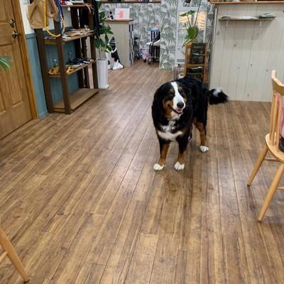 看板犬と店内写真