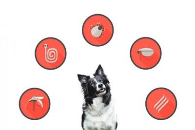 犬と寄生虫のアイコン