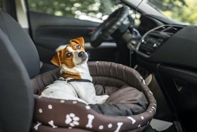 車の中に置かれた犬用ベッドで休む犬