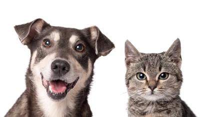 犬と猫のアップ