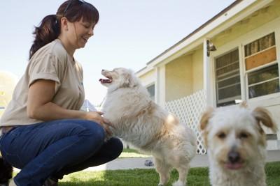 預かり施設のスタッフと犬たち