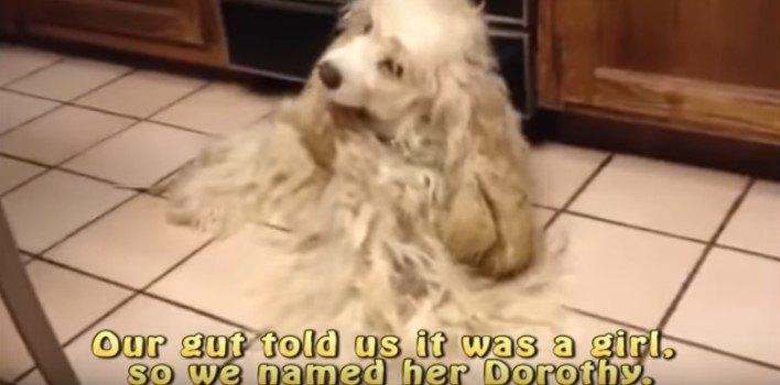 自分で体をなめることもできない犬