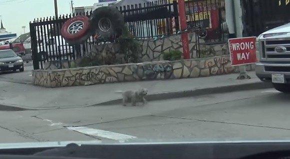 車道に出てくる犬