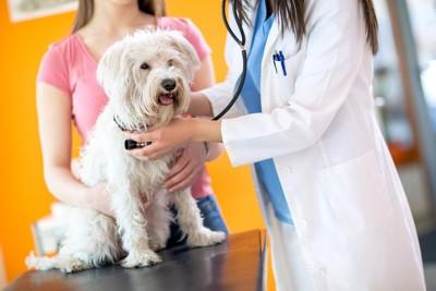 診察を受ける白い犬と女性