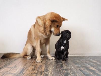 隣に座る大きい犬と小さい犬