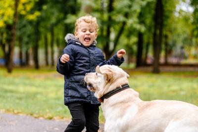 近づく犬を怖がって泣いている子供