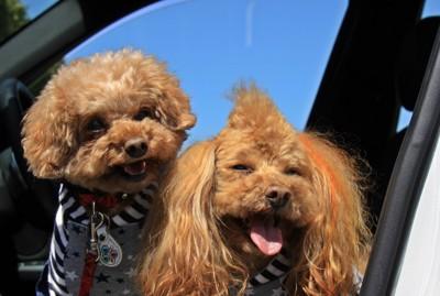 表情豊かな二匹の犬