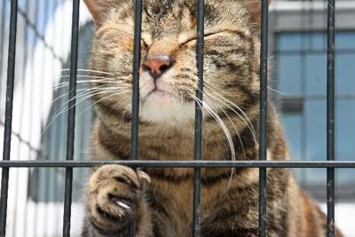柵越しの猫 キジトラ 目をつぶっている