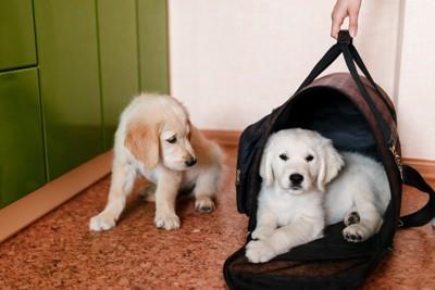 キャリーに入る犬と見つめる犬