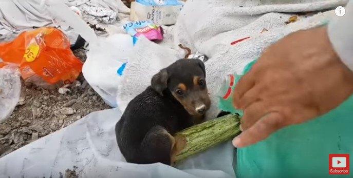 ゴミの中の黒子犬