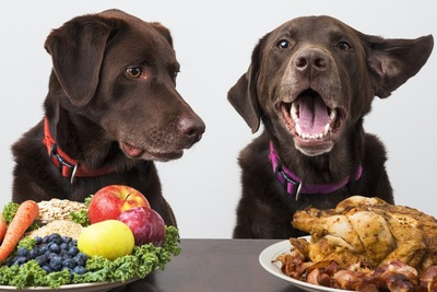 フルーツとお肉を前にする二匹の犬