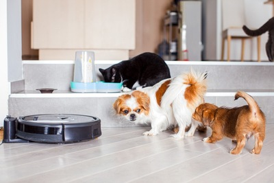黒いロボット掃除機と二頭の犬と猫