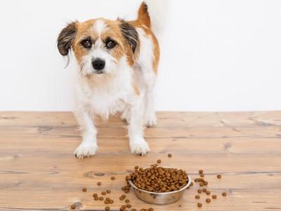 お皿から溢れるドッグフードと立ち尽くす犬