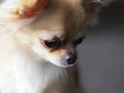 下を向いている犬の写真