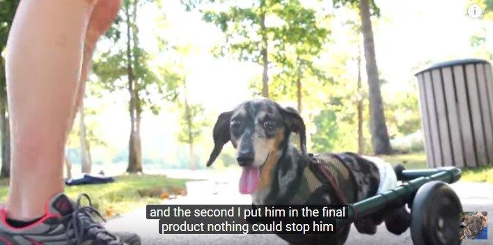 カートをつけた犬