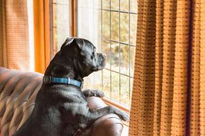 窓から外を眺めている黒い犬