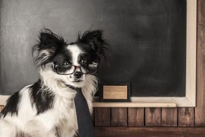 黒板の前に立つ犬