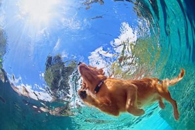 水の中を泳ぐ犬