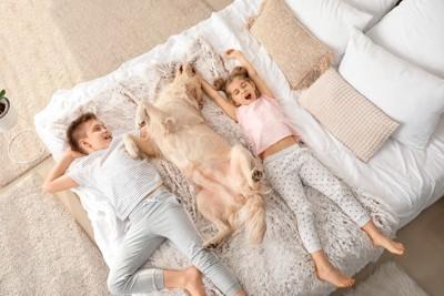 ベッドで寝転がる男の子と女の子と犬