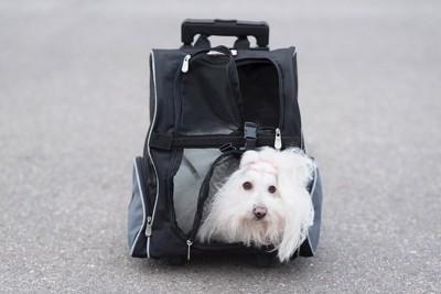 犬用リュックに入る犬