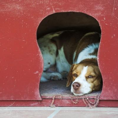 犬小屋にいる犬