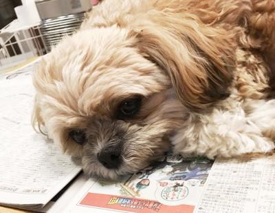 新聞に乗る犬