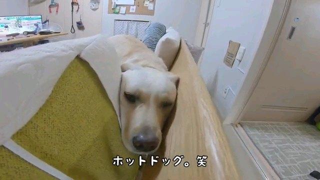 ホットドッグ笑~字幕
