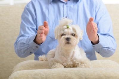 おしりを触られそうな犬