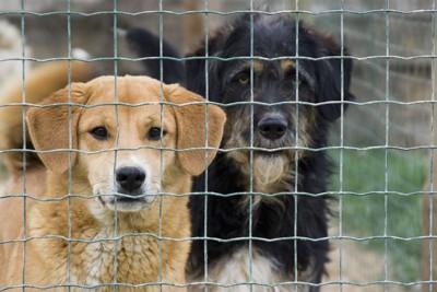 網越しに見つめる保護犬たち