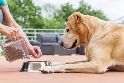 飼い主にドッグフードを入れてもらうのを待つ犬
