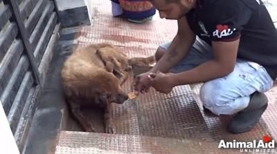 救助隊員と犬