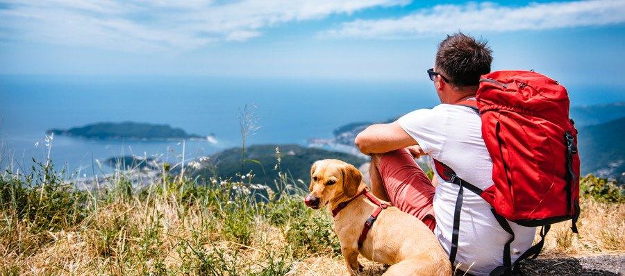 山の上にいる男性と犬