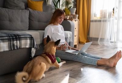 パソコンを見ている飼い主の横でアピールする犬