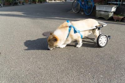 補助車輪つけた犬