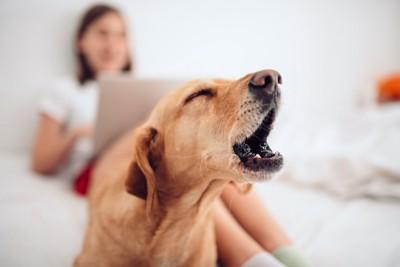 パソコンを見ている女性の足元で吠えている犬