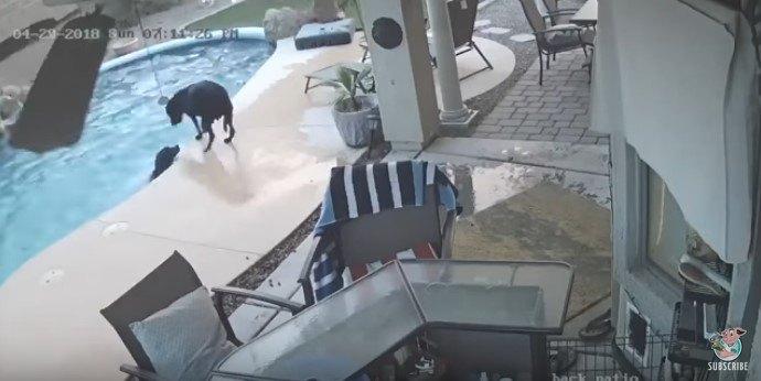 水しぶきをあげる犬と、それを見る犬