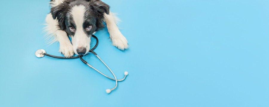 診察器と犬
