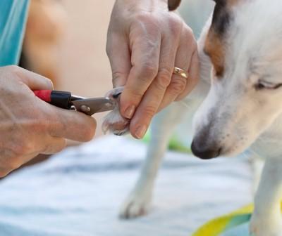 足の爪を切られている犬