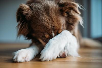 前足で顔を隠す犬