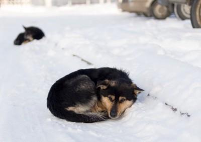 雪の上で凍える犬