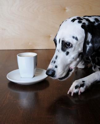 コーヒーの前の犬