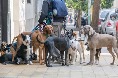 ドッグウォーカーと犬たち