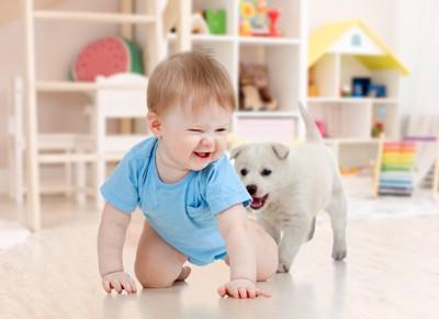 赤ちゃんを追いかける犬