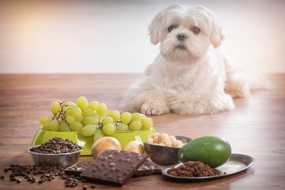犬に毒な食べ物と白い犬