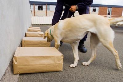 袋の臭いを見つける犬