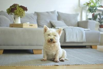 リビングの犬